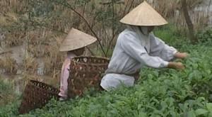 1000x550_video-carnets-d-asie-vietnam-nems-papayes-et-vermicelles-2-4_i2f